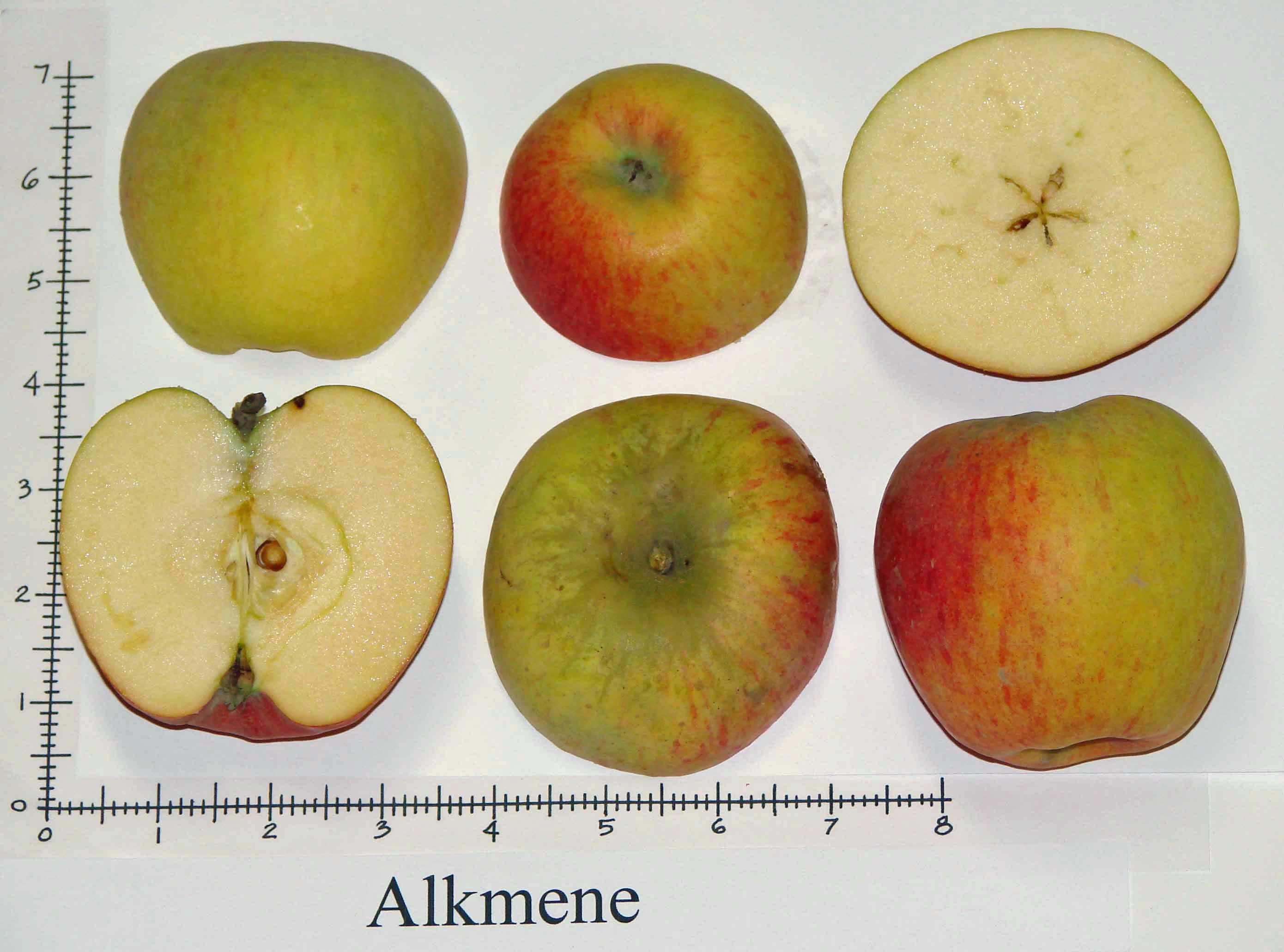 Alkmene