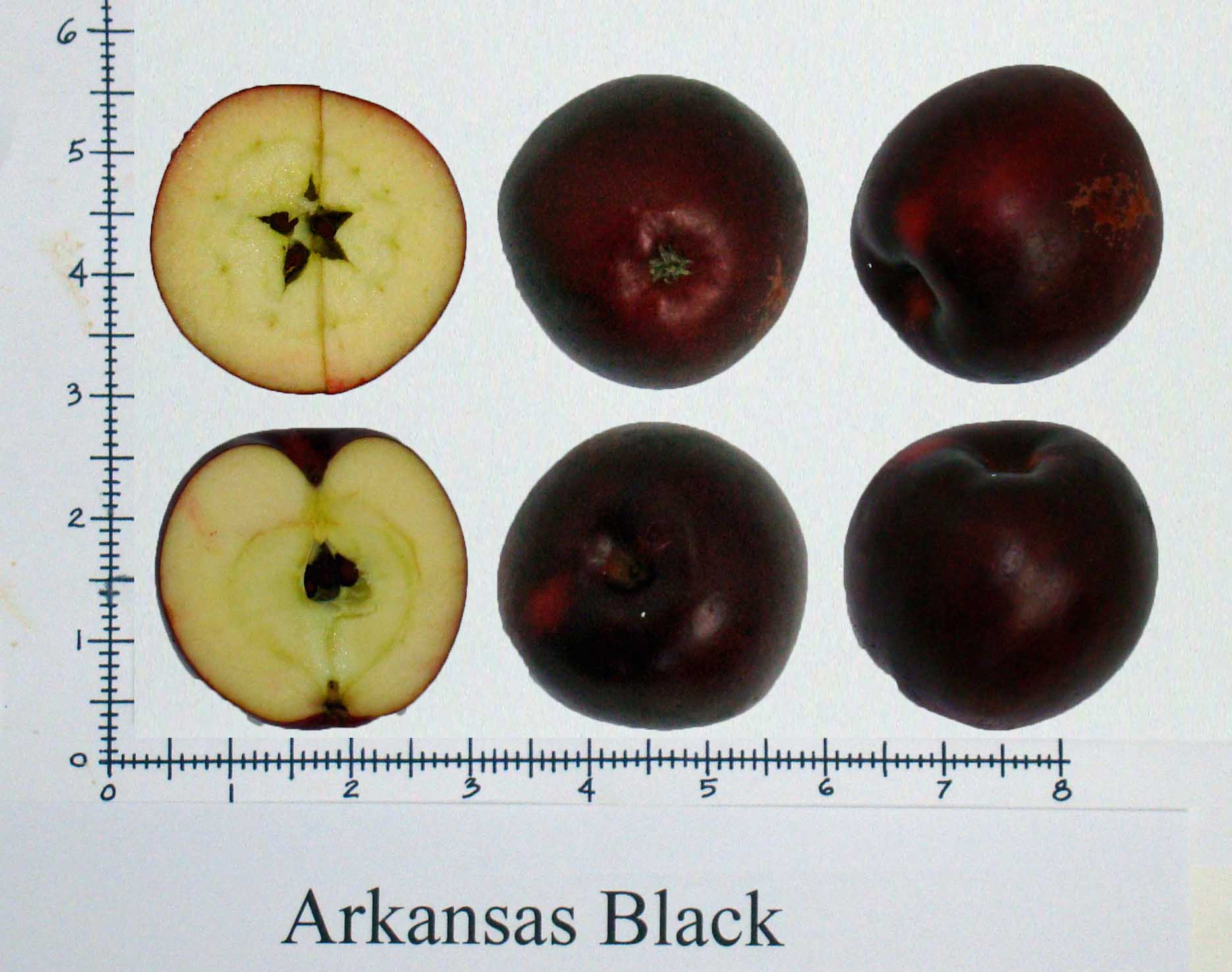 Arkansas Black