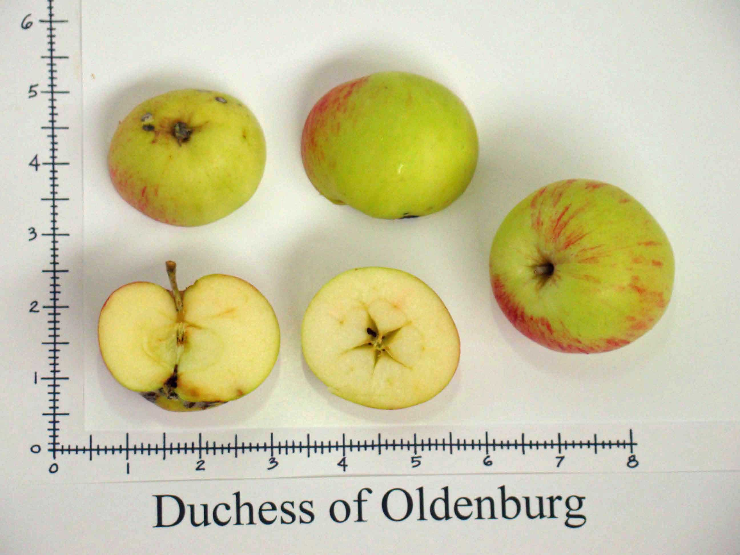 Duchess of Oldenburg