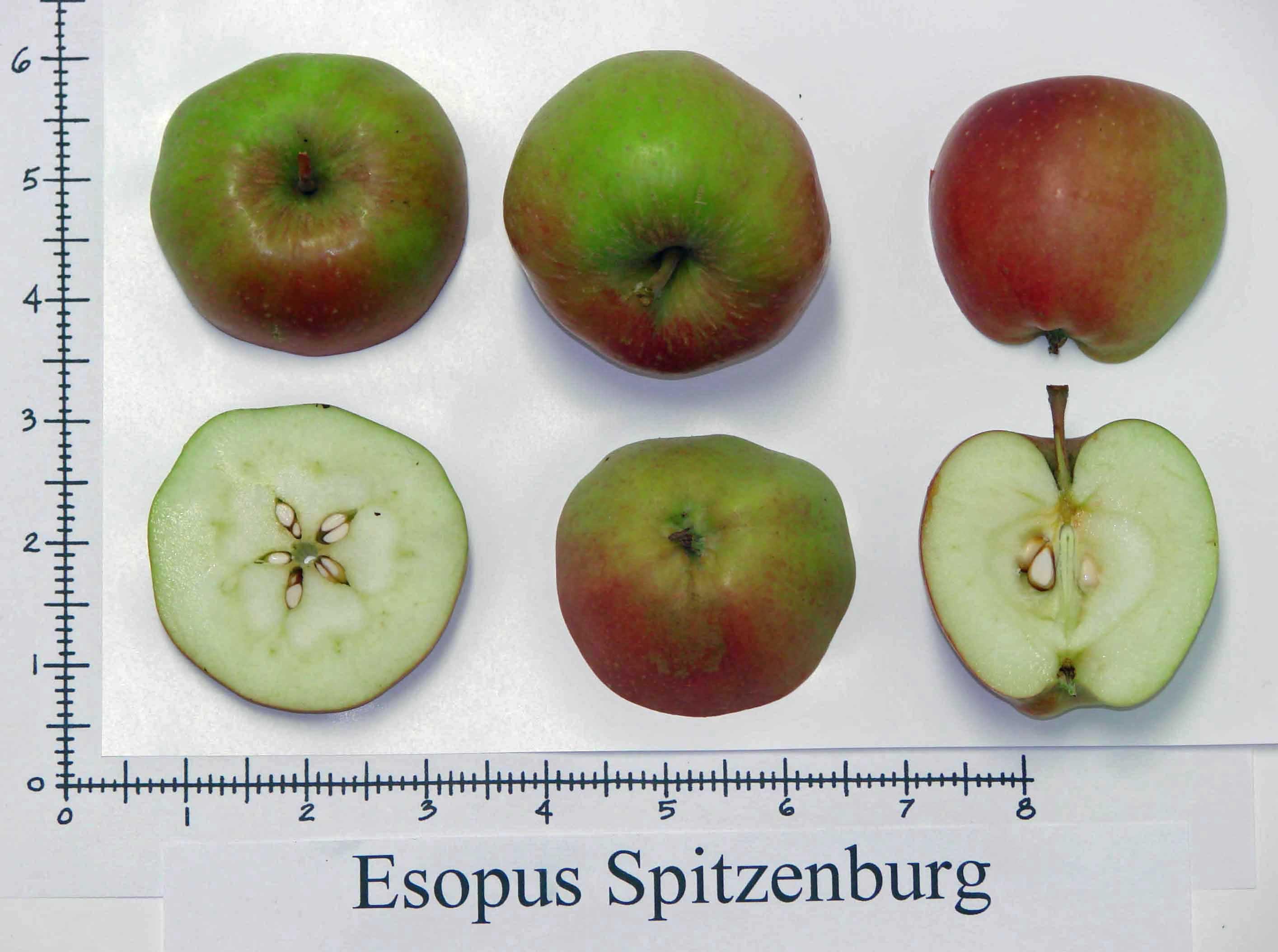 Esopus Spitzenburg