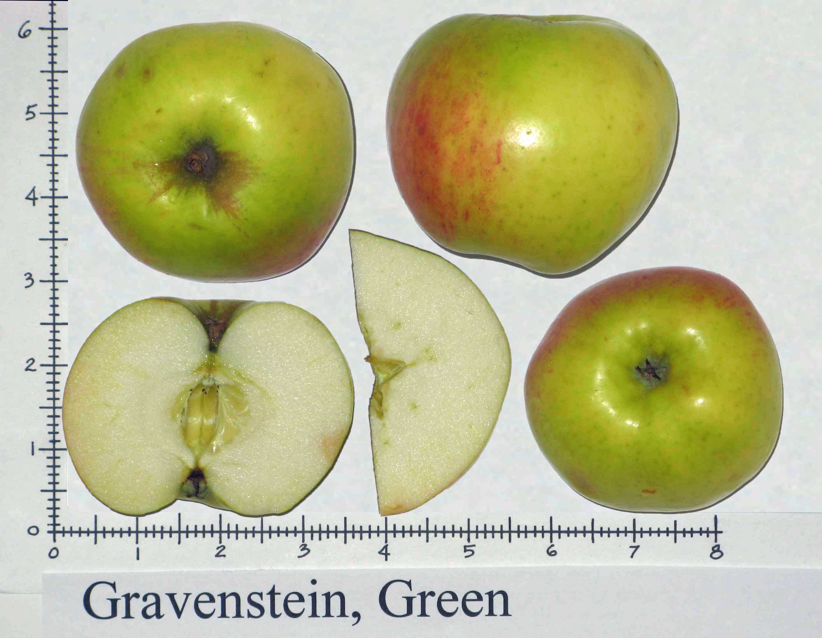 Gravenstein, Green