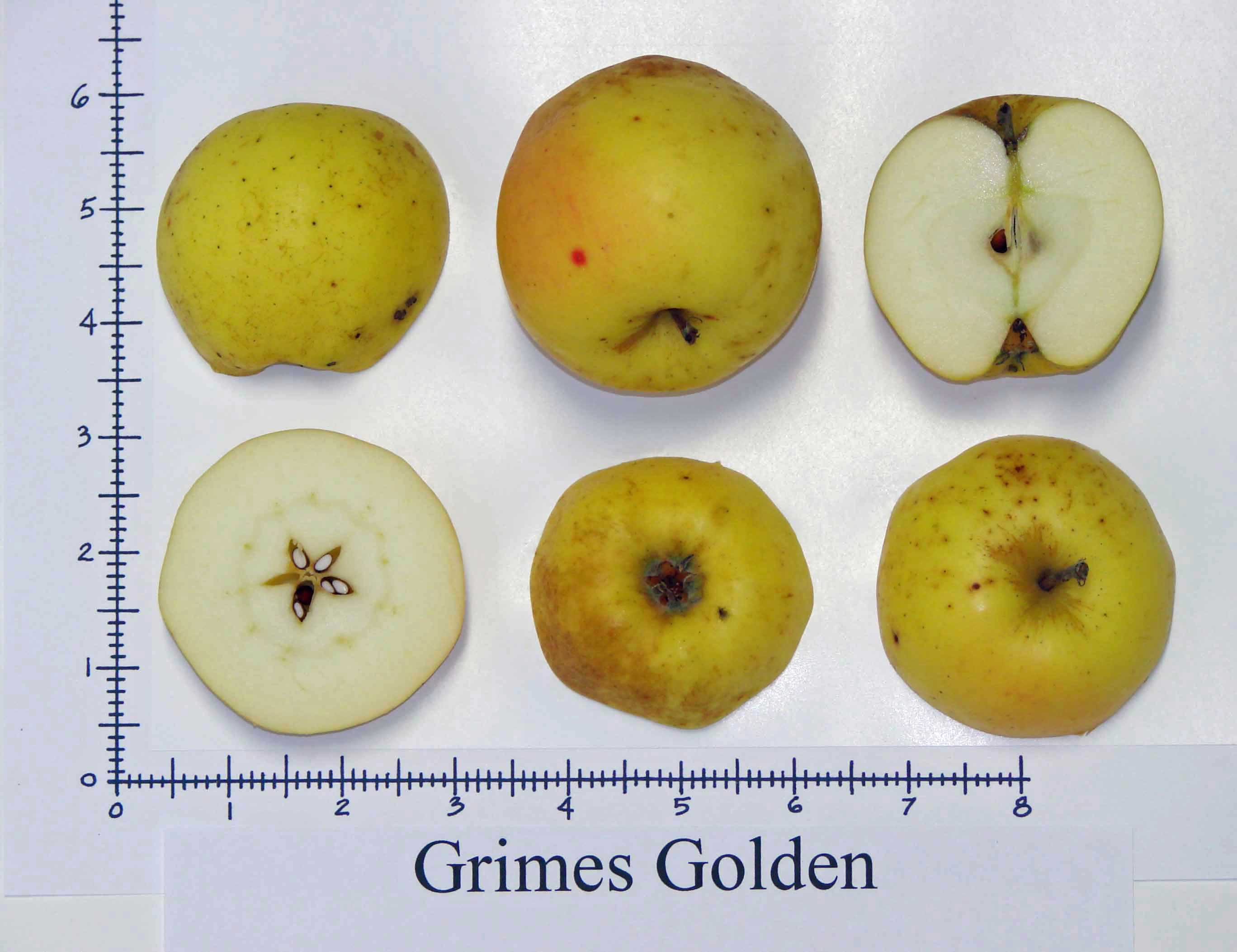 Grimes Golden