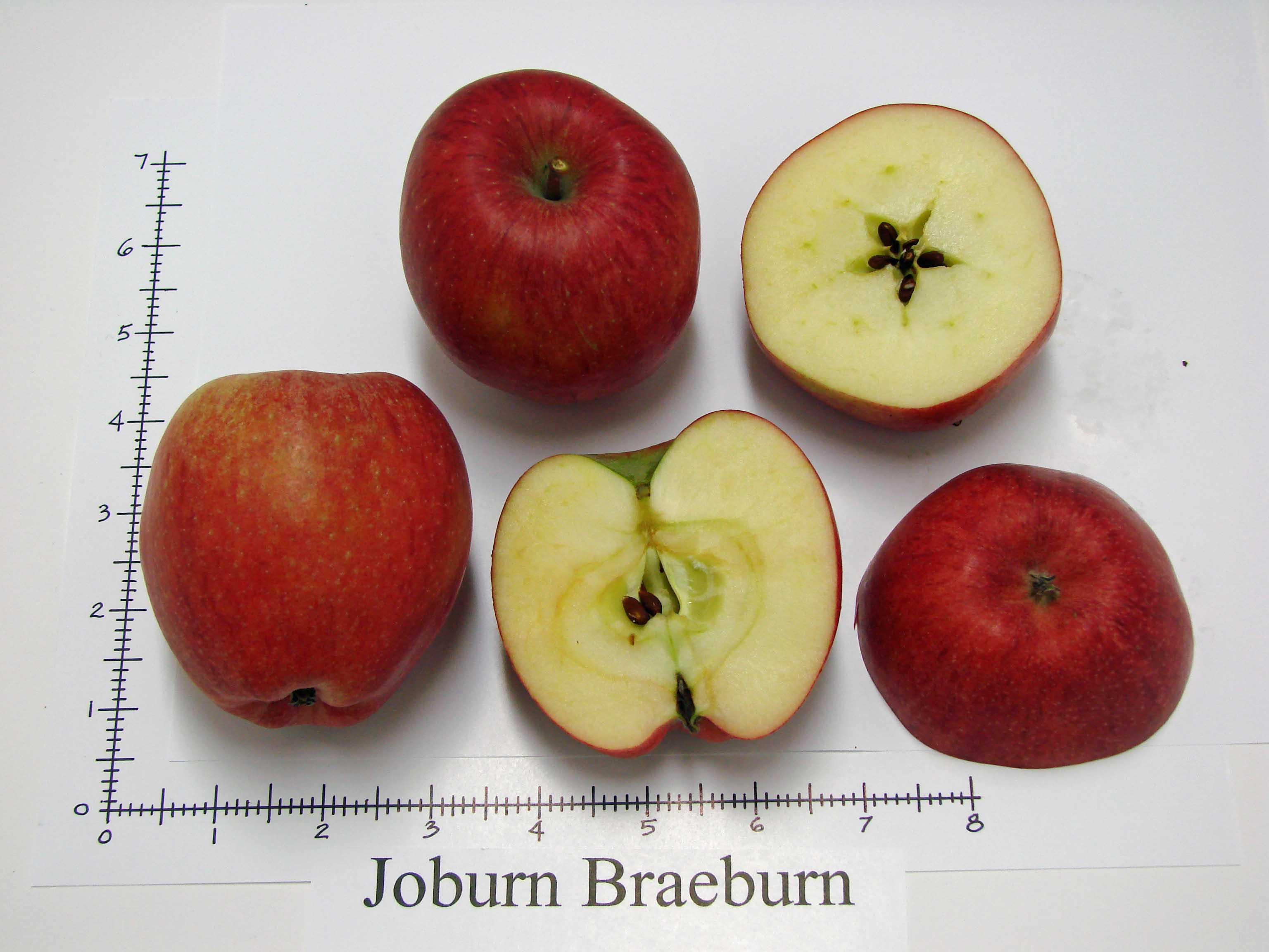 Braeburn 2