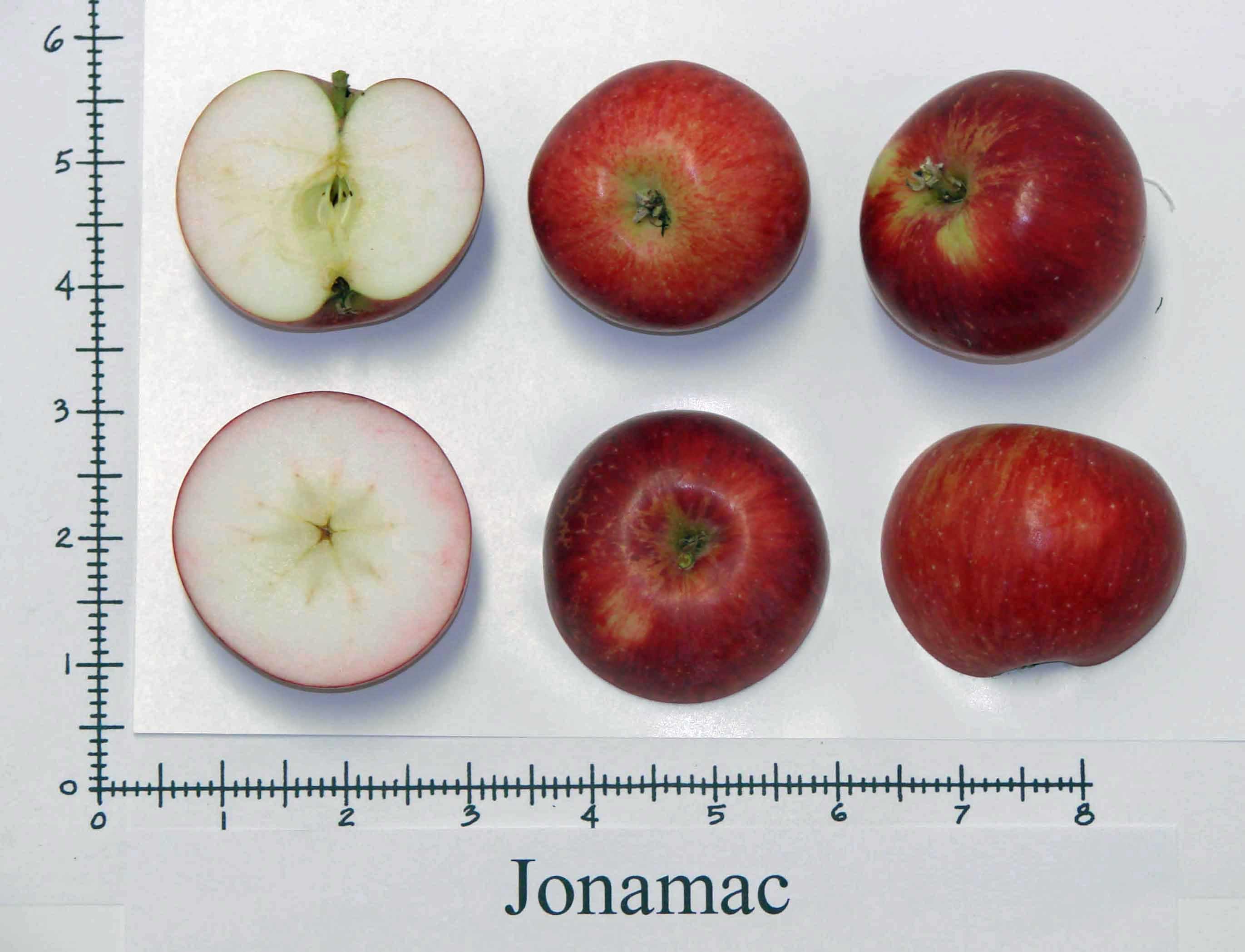Jonamac