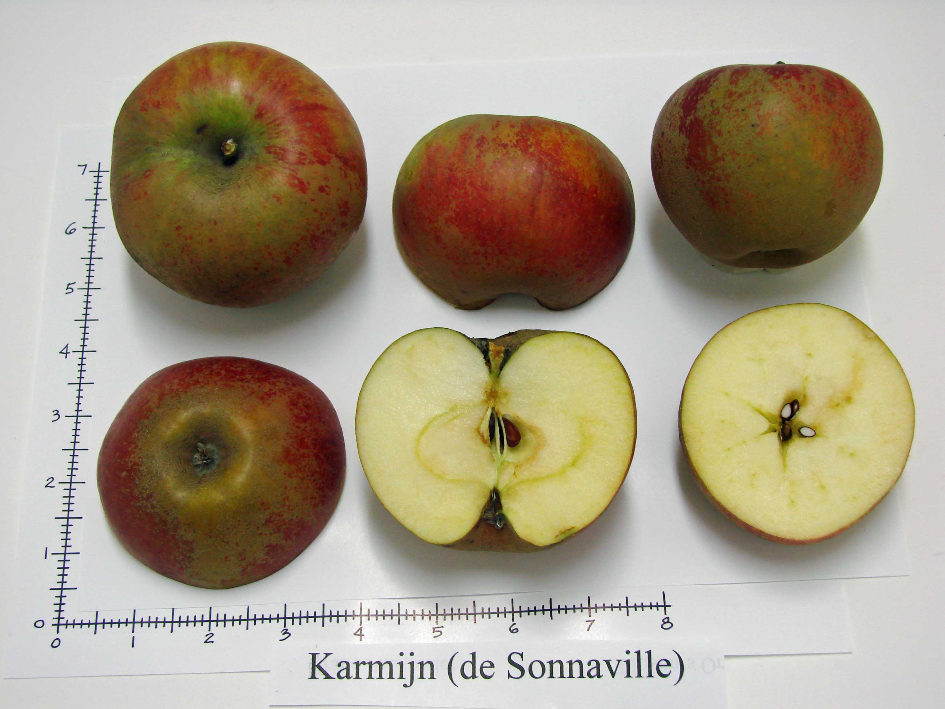 Karmijn de Sonnaville