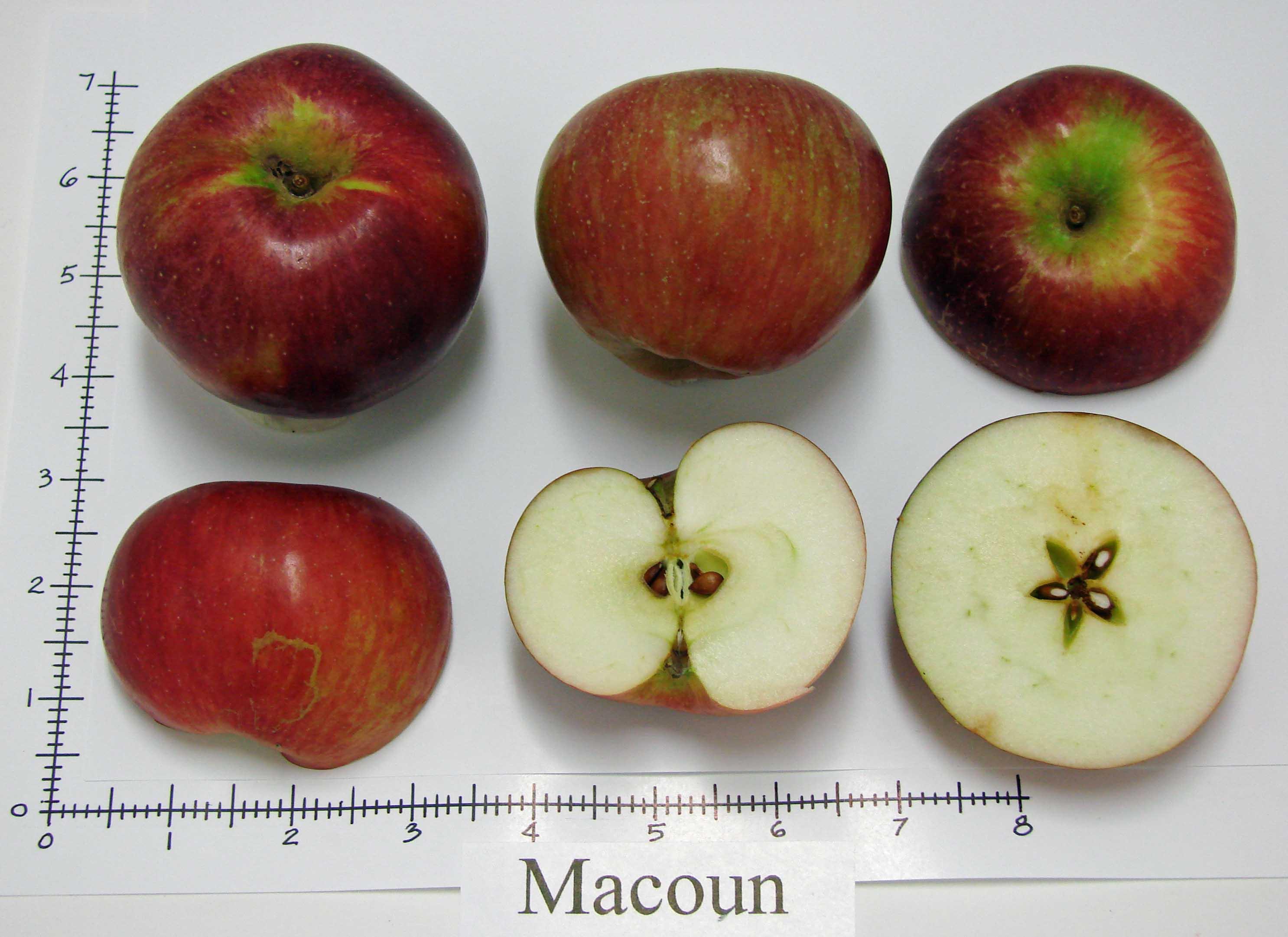Macoun