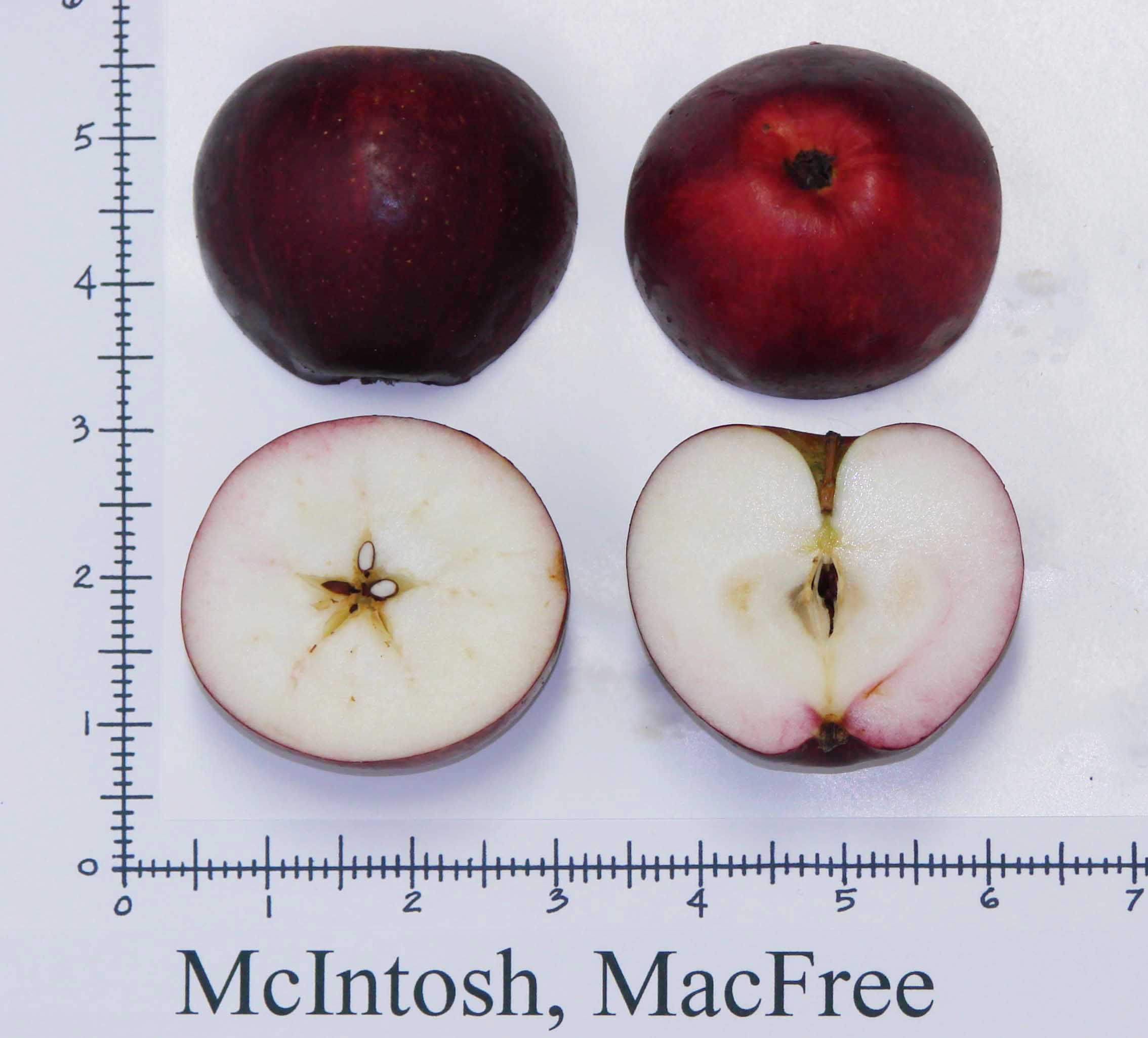 McIntosh Macfree