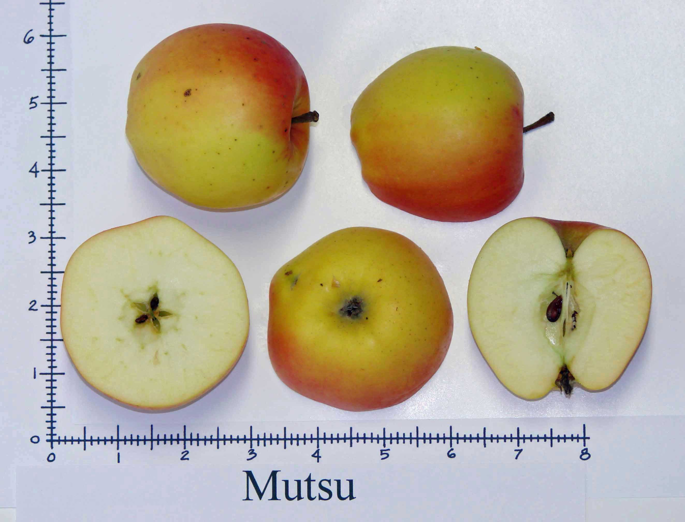 Mutsu (Crispin)