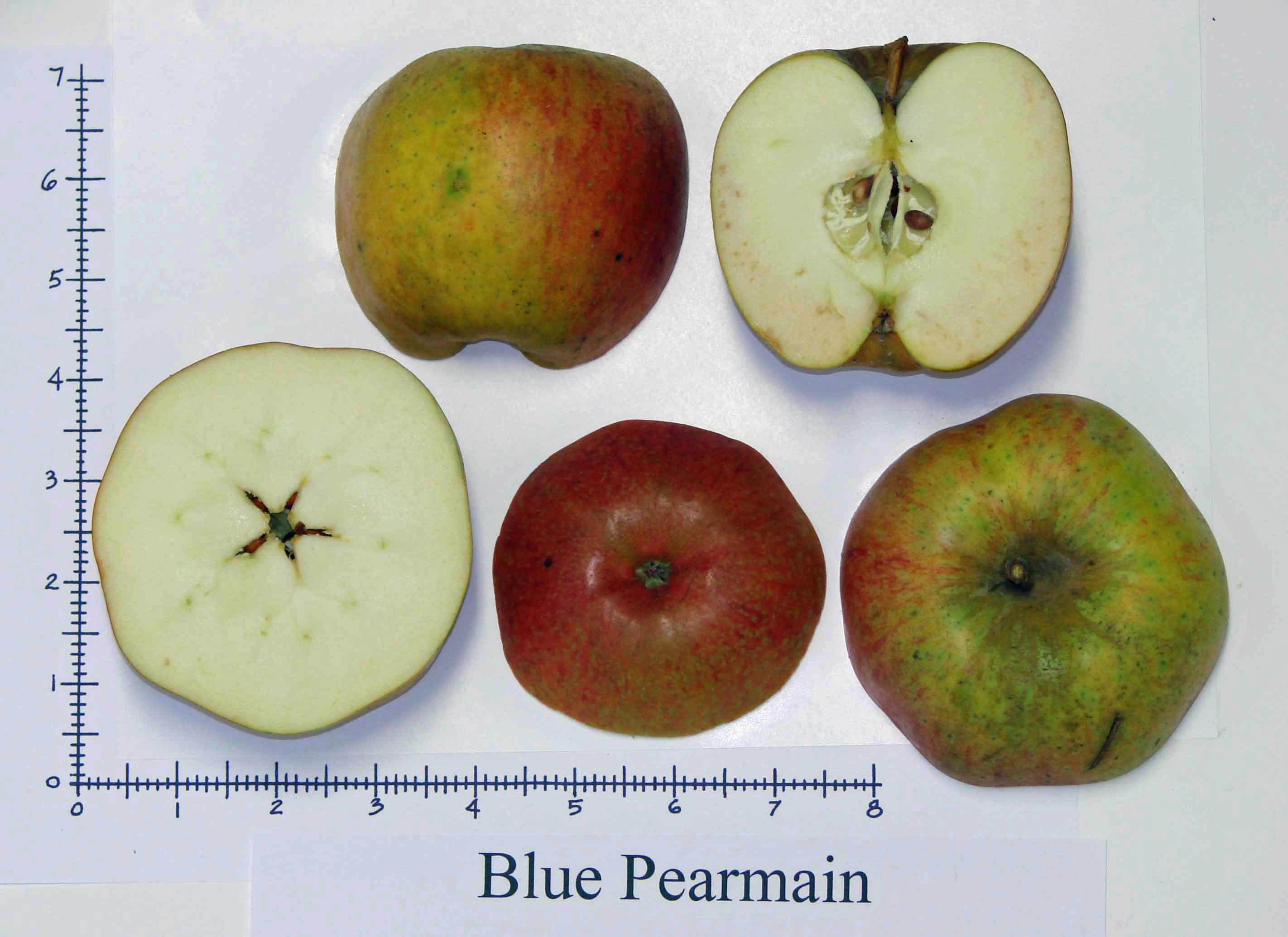 Blue Pearmain