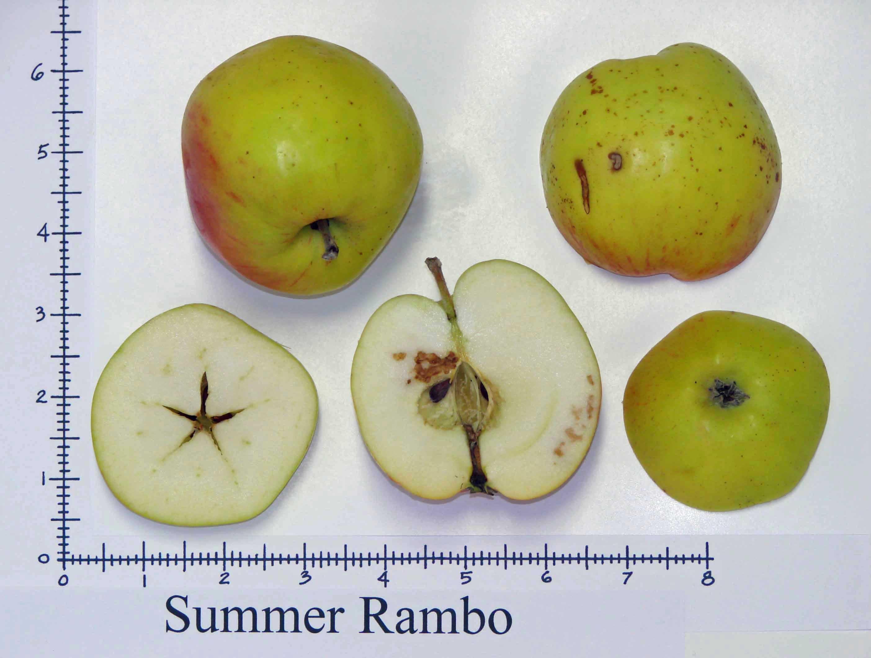 Summer Rambo