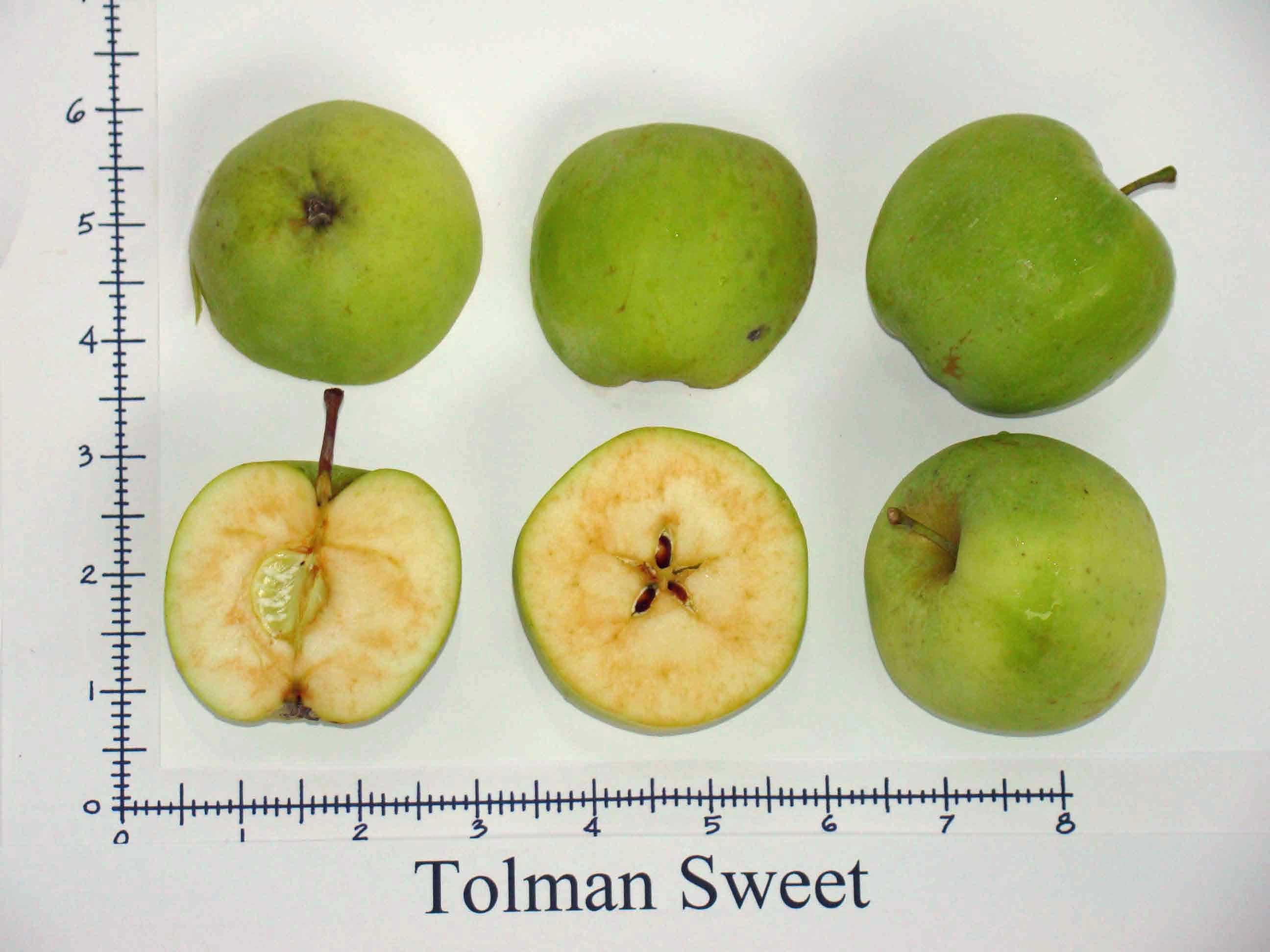 Tolman Sweet