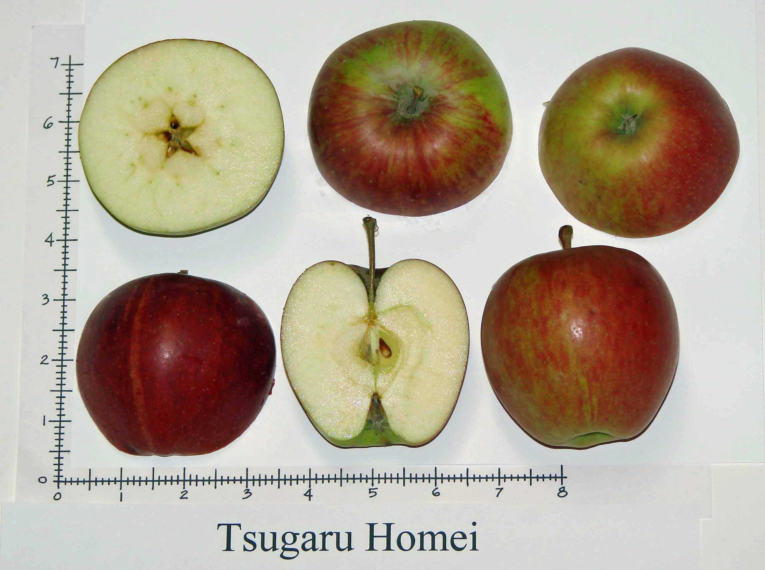 Tsugaru Homei