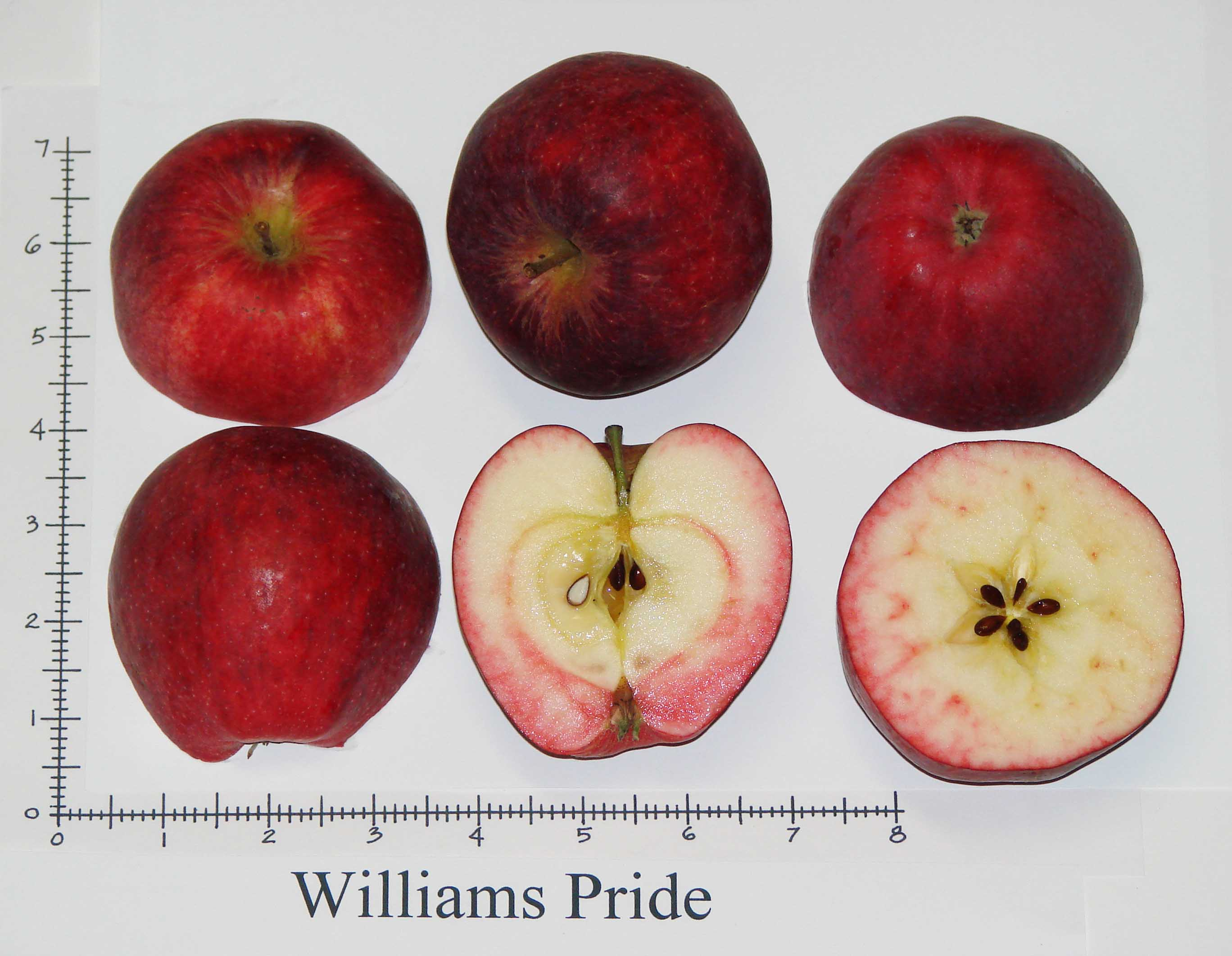 Williams\' Pride
